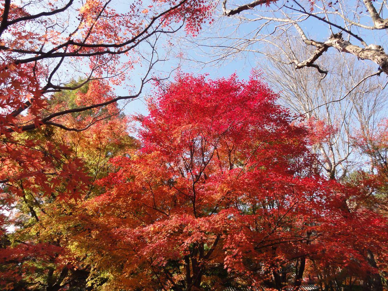 20161124 Kyoto 04