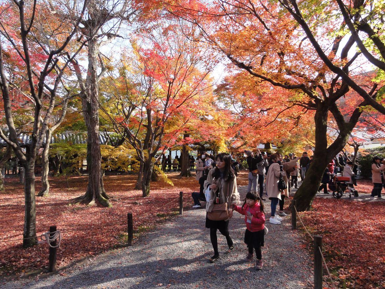 20161124 Kyoto 06