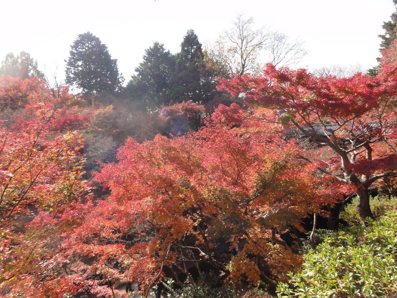 20161124 Kyoto 08