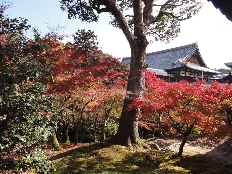 20161124 Kyoto 12