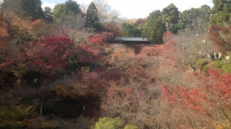 20161124 Kyoto 31