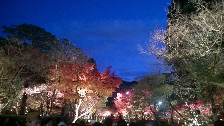 20161124 Kyoto 33