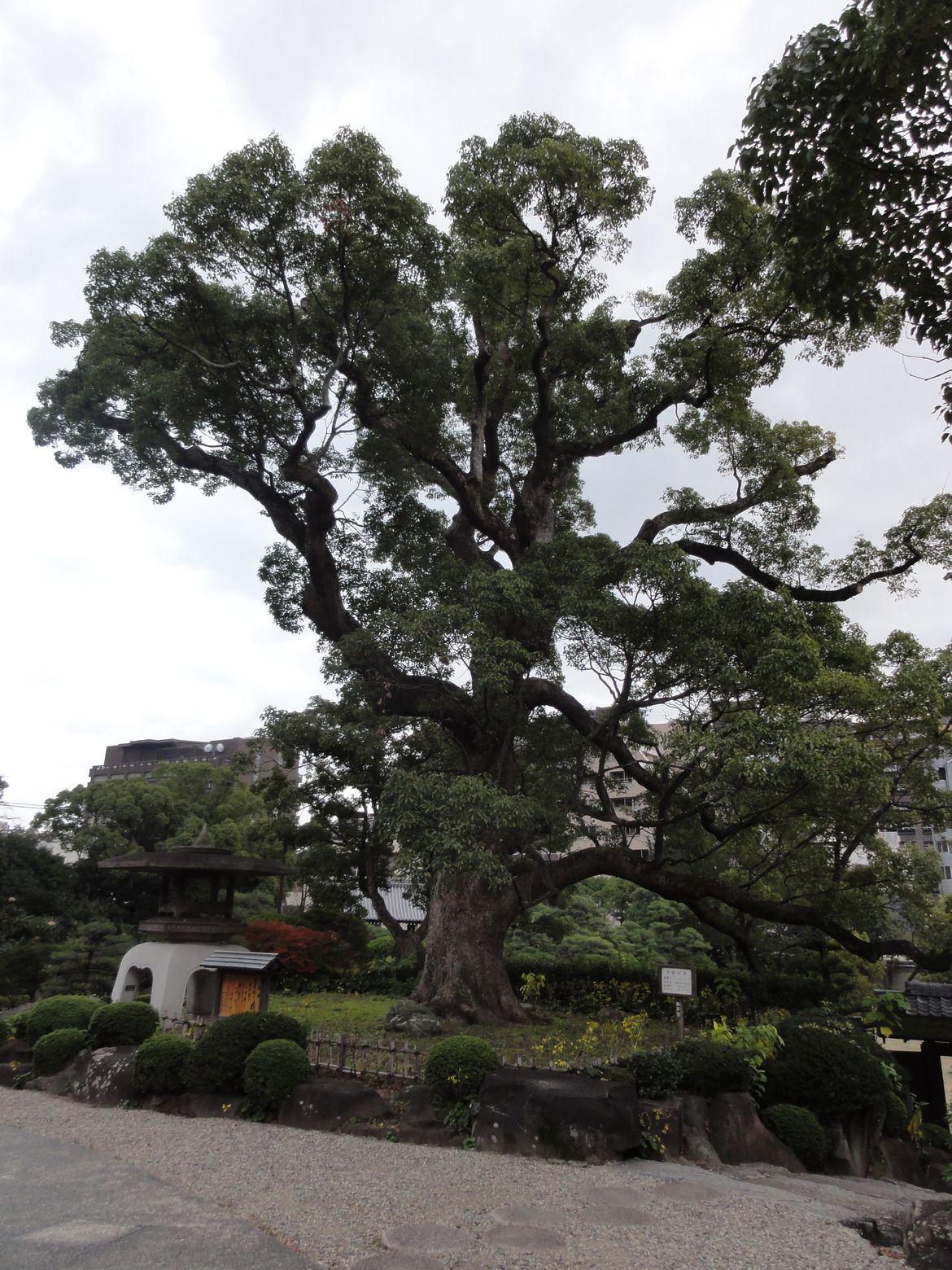 20161128 Jardin Kobe 12
