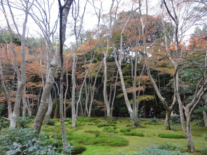 20161129 Arashiyama 02