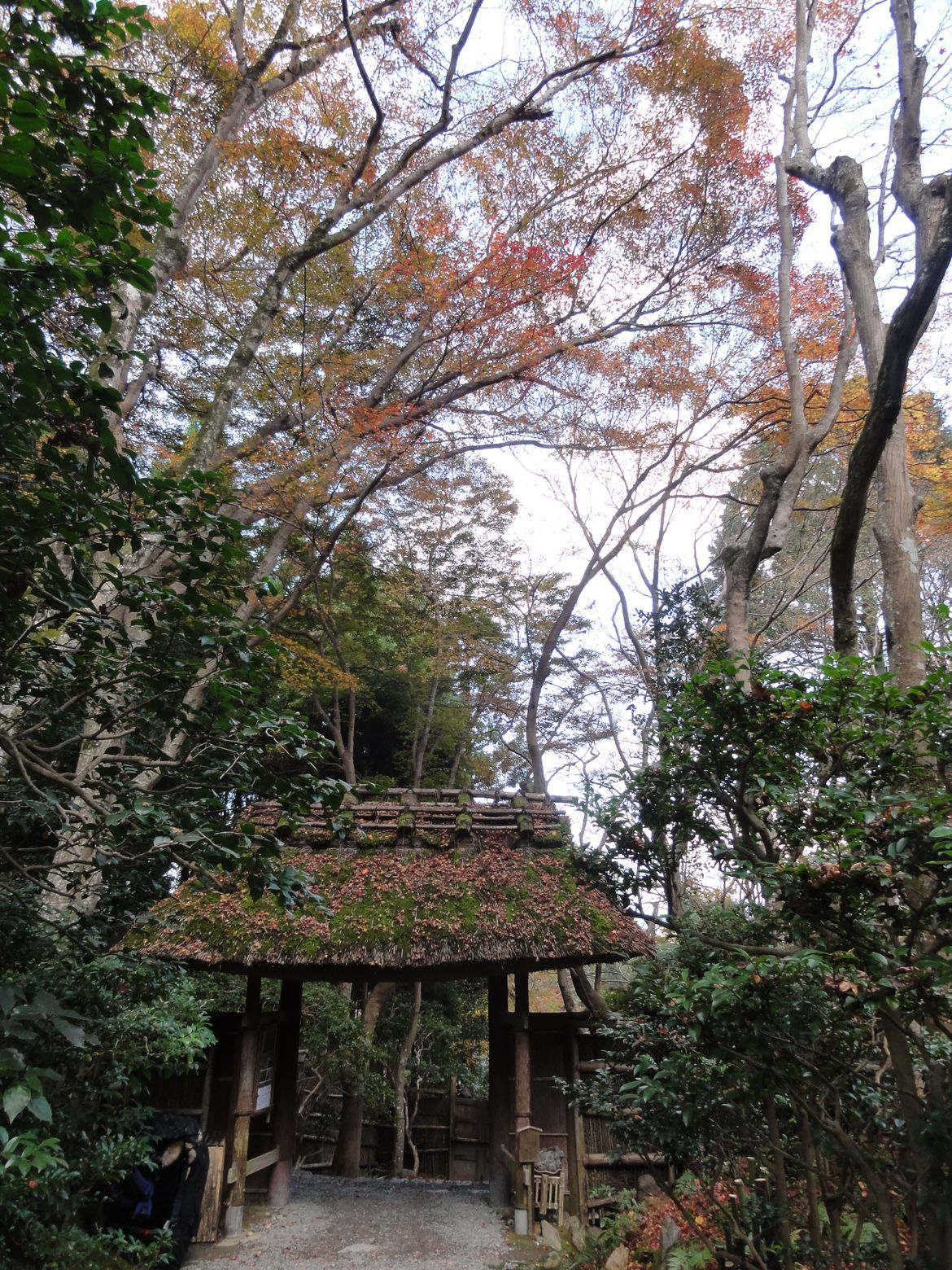 20161129 Arashiyama 03
