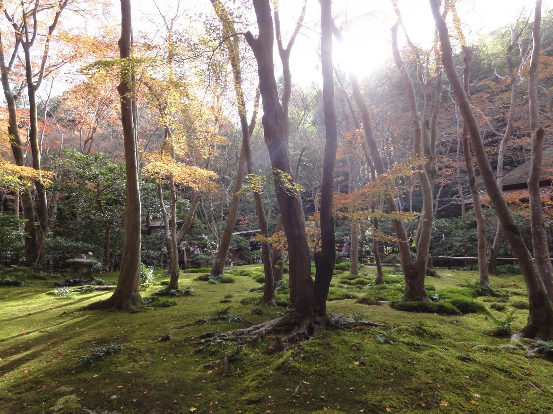 20161129 Arashiyama 04