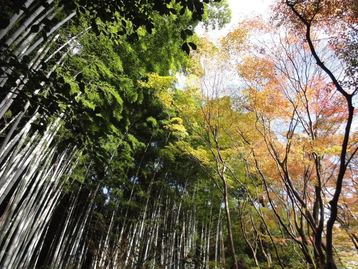 20161129 Arashiyama 06