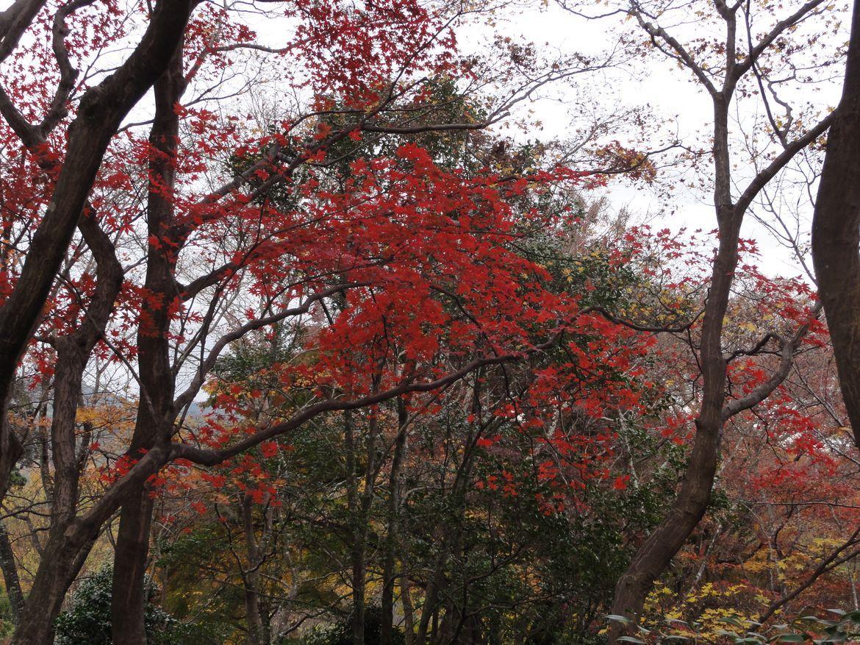 20161129 Arashiyama 13