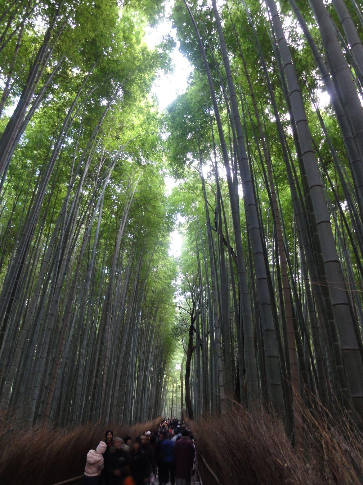 20161129 Arashiyama 14