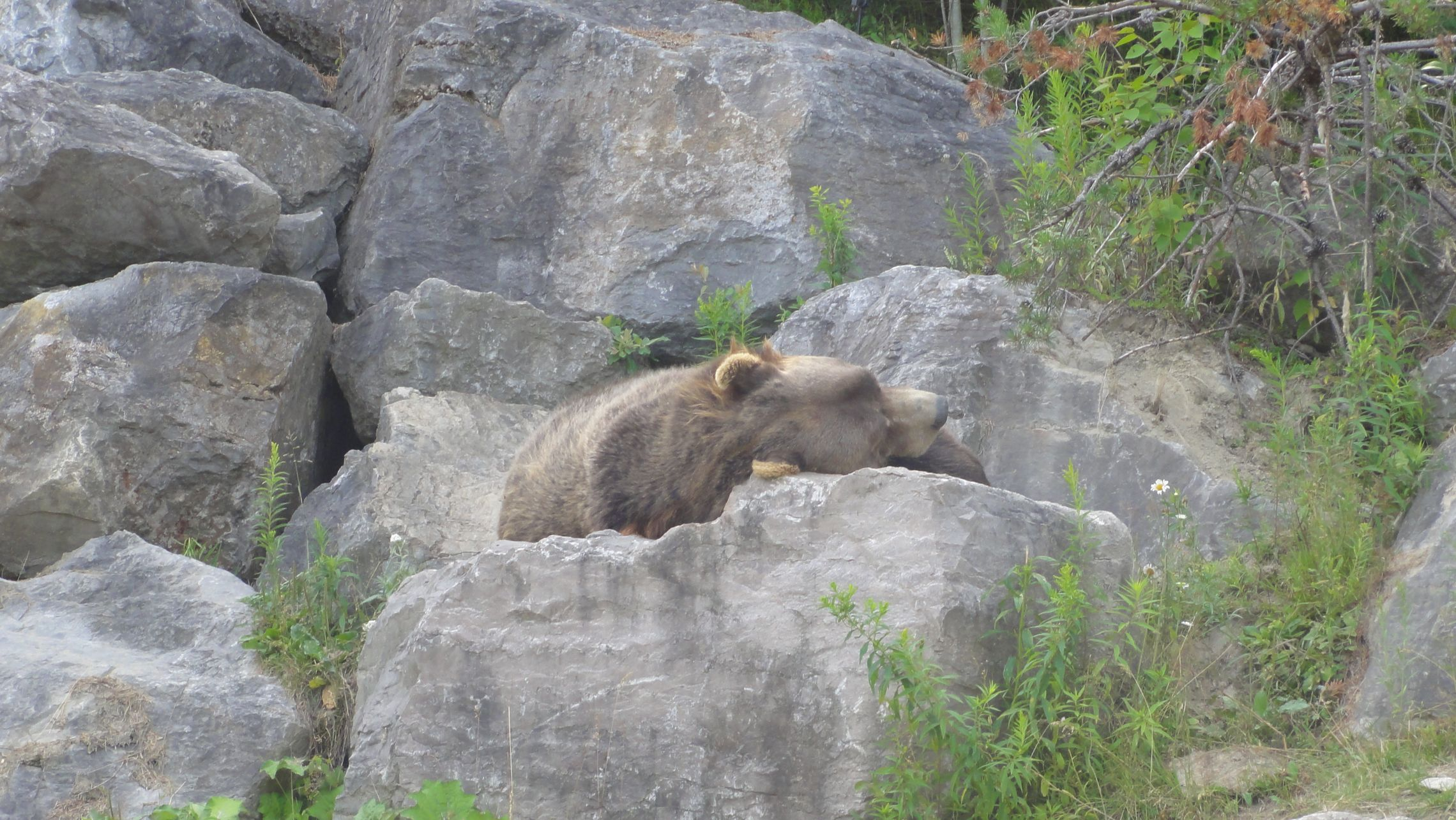 20170724 Zoo Saint Fabien 08