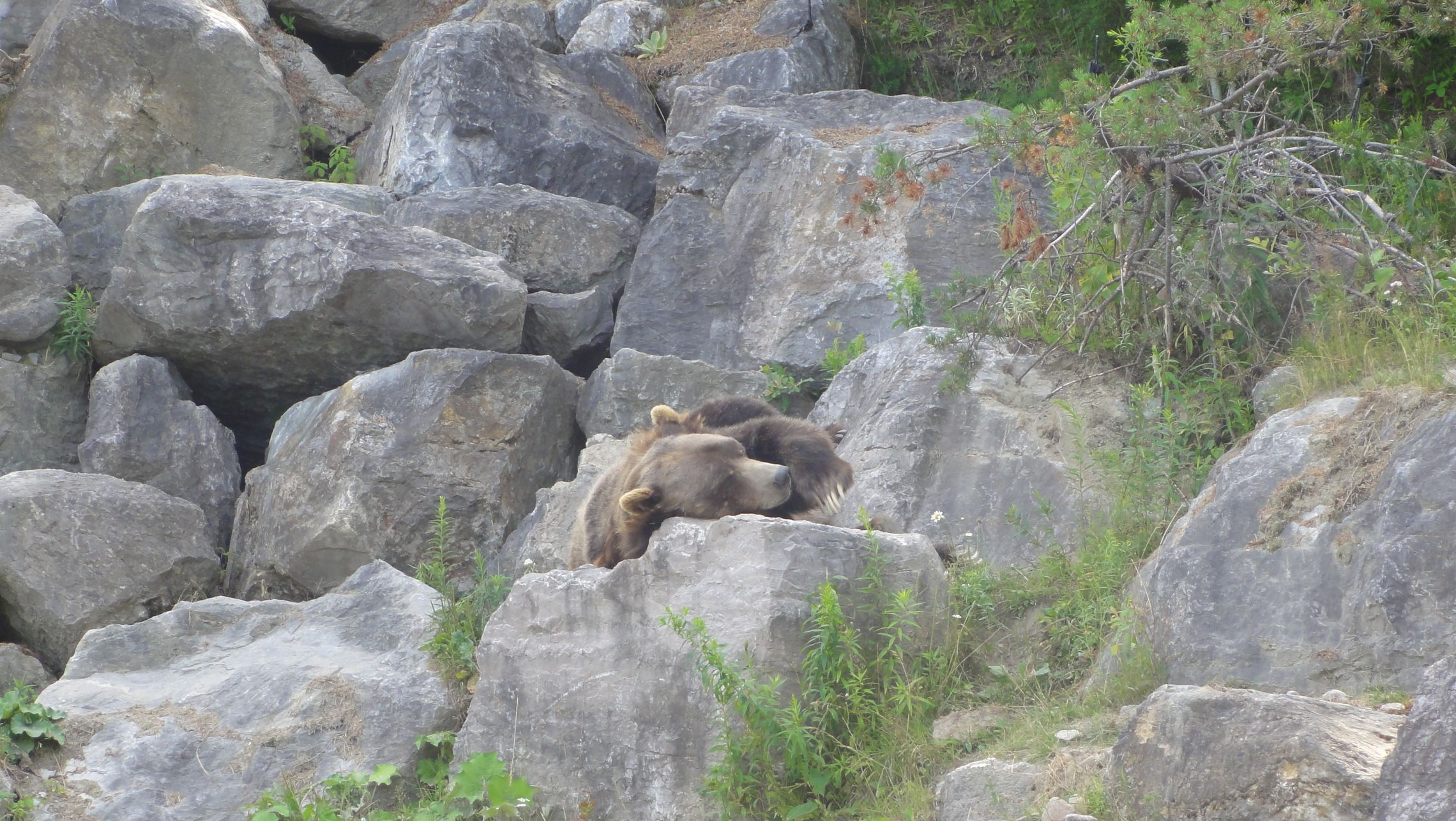 20170724 Zoo Saint Fabien 09
