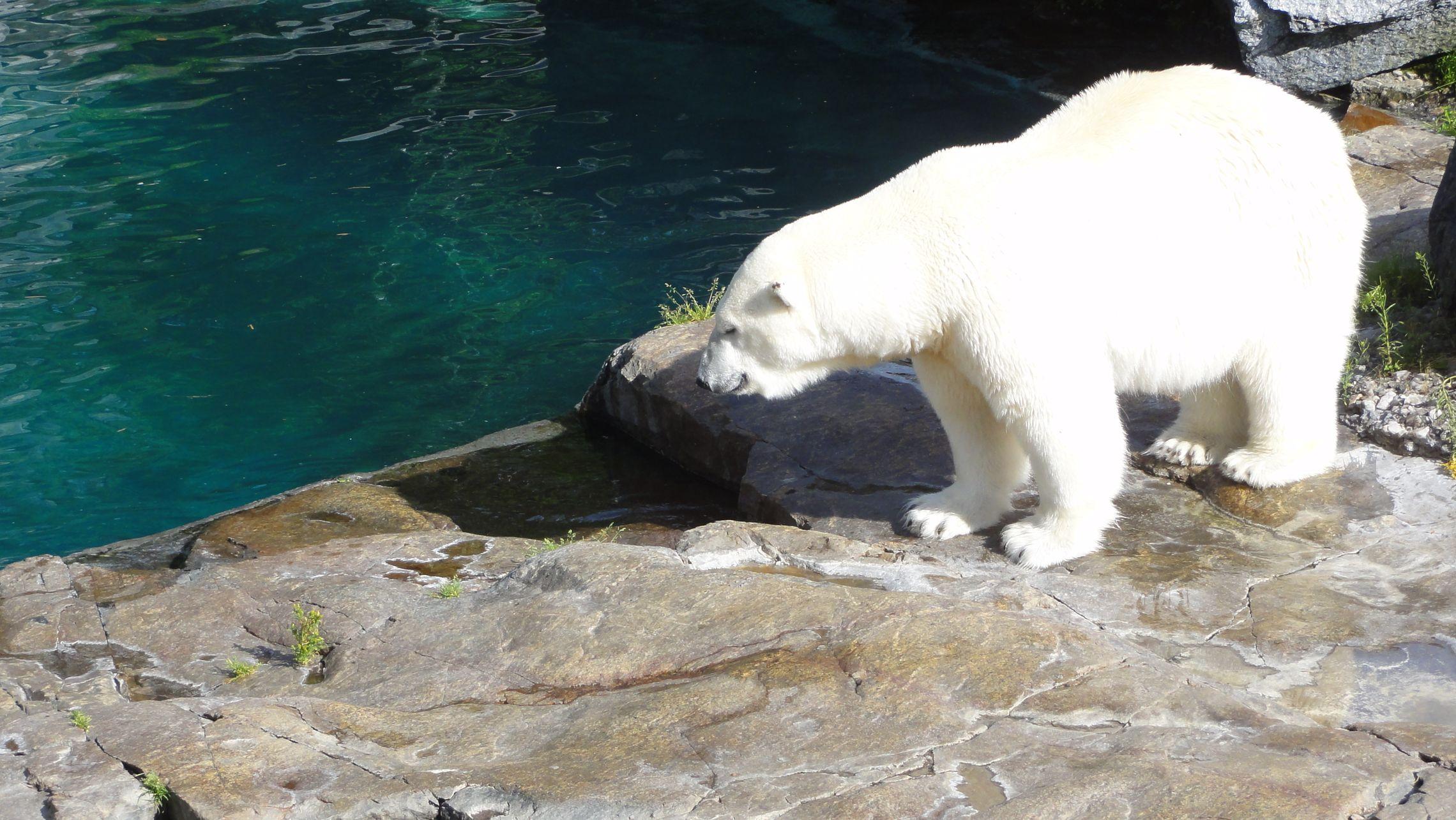 20170724 Zoo Saint Fabien 20
