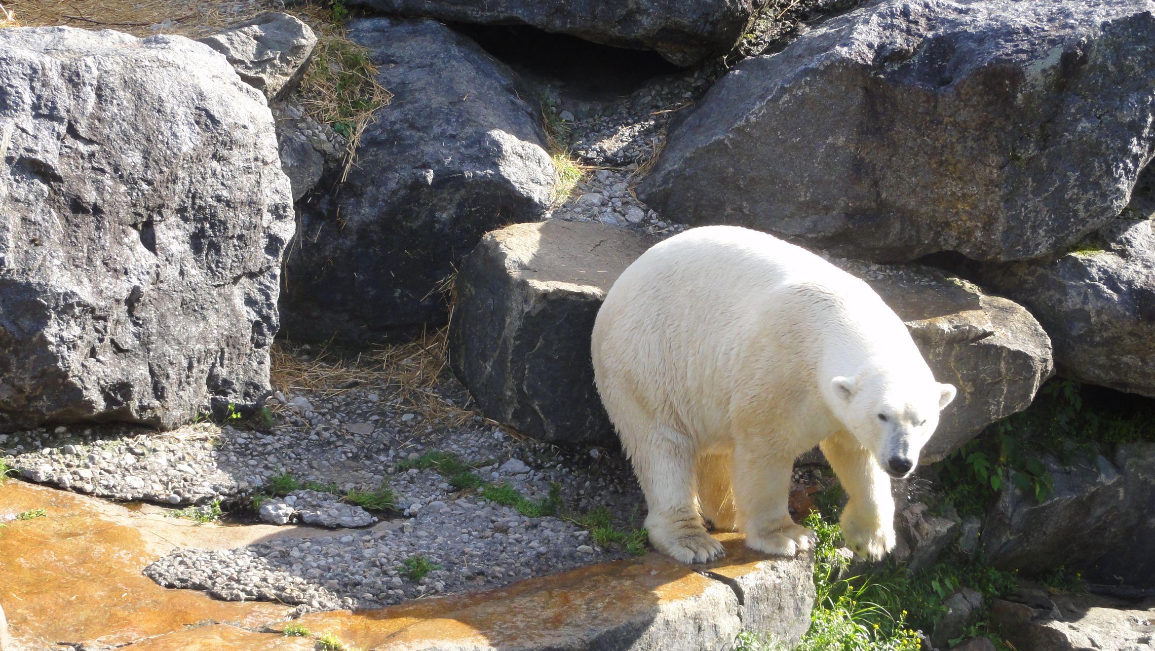 20170724 Zoo Saint Fabien 23