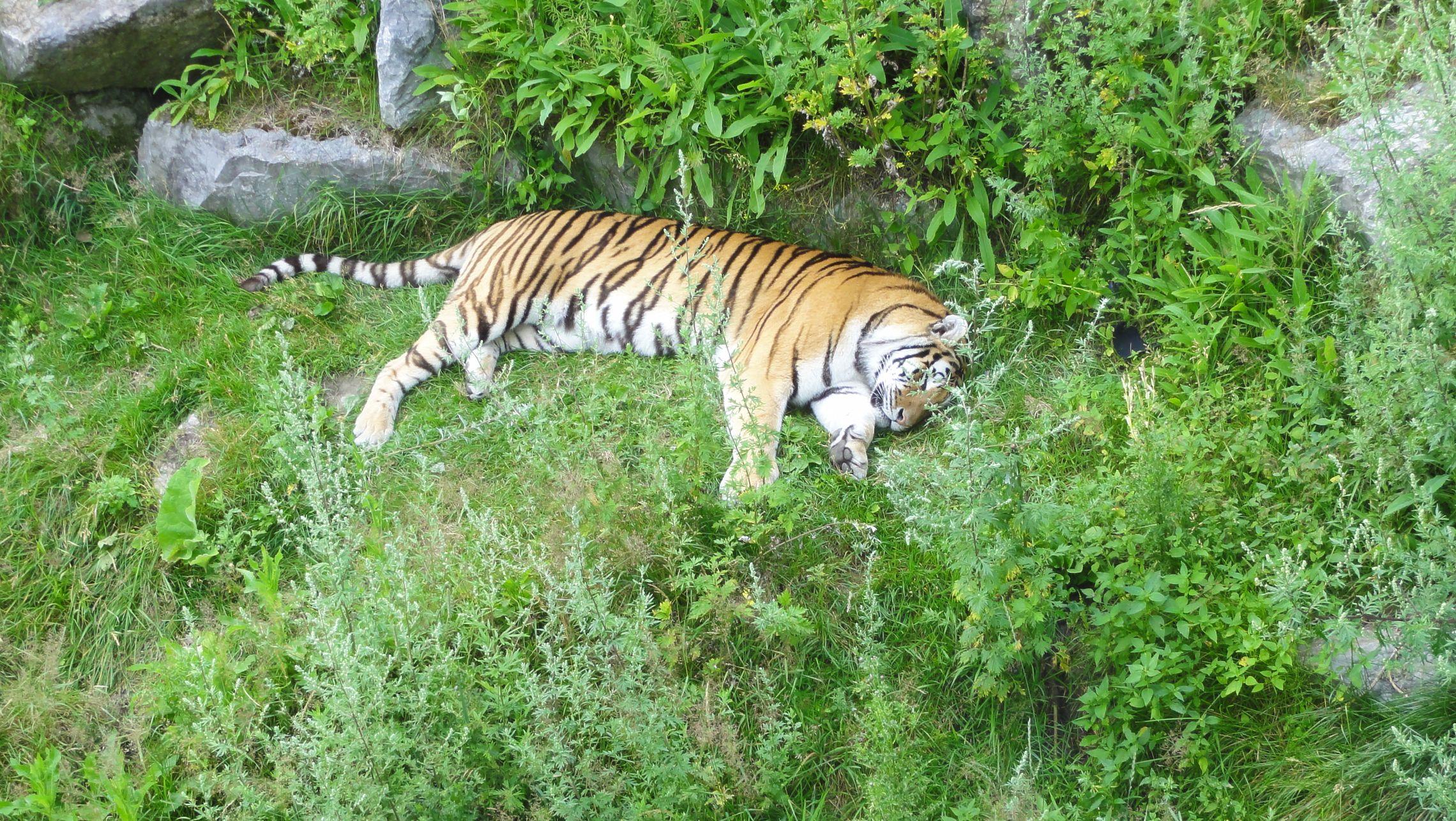 20170724 Zoo Saint Fabien 26