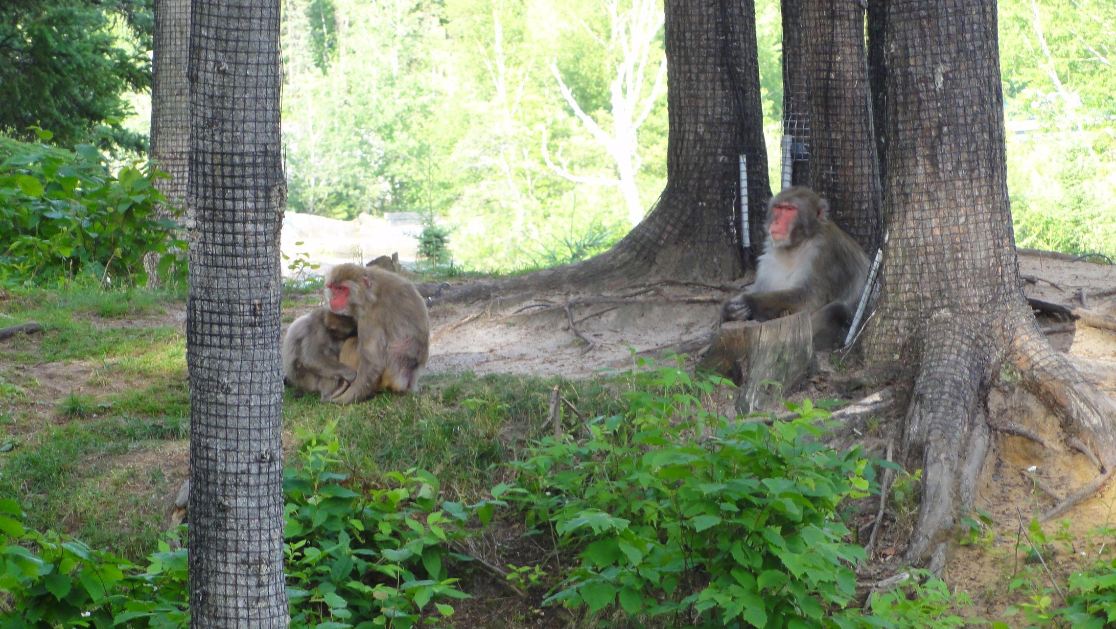 20170724 Zoo Saint Fabien 27