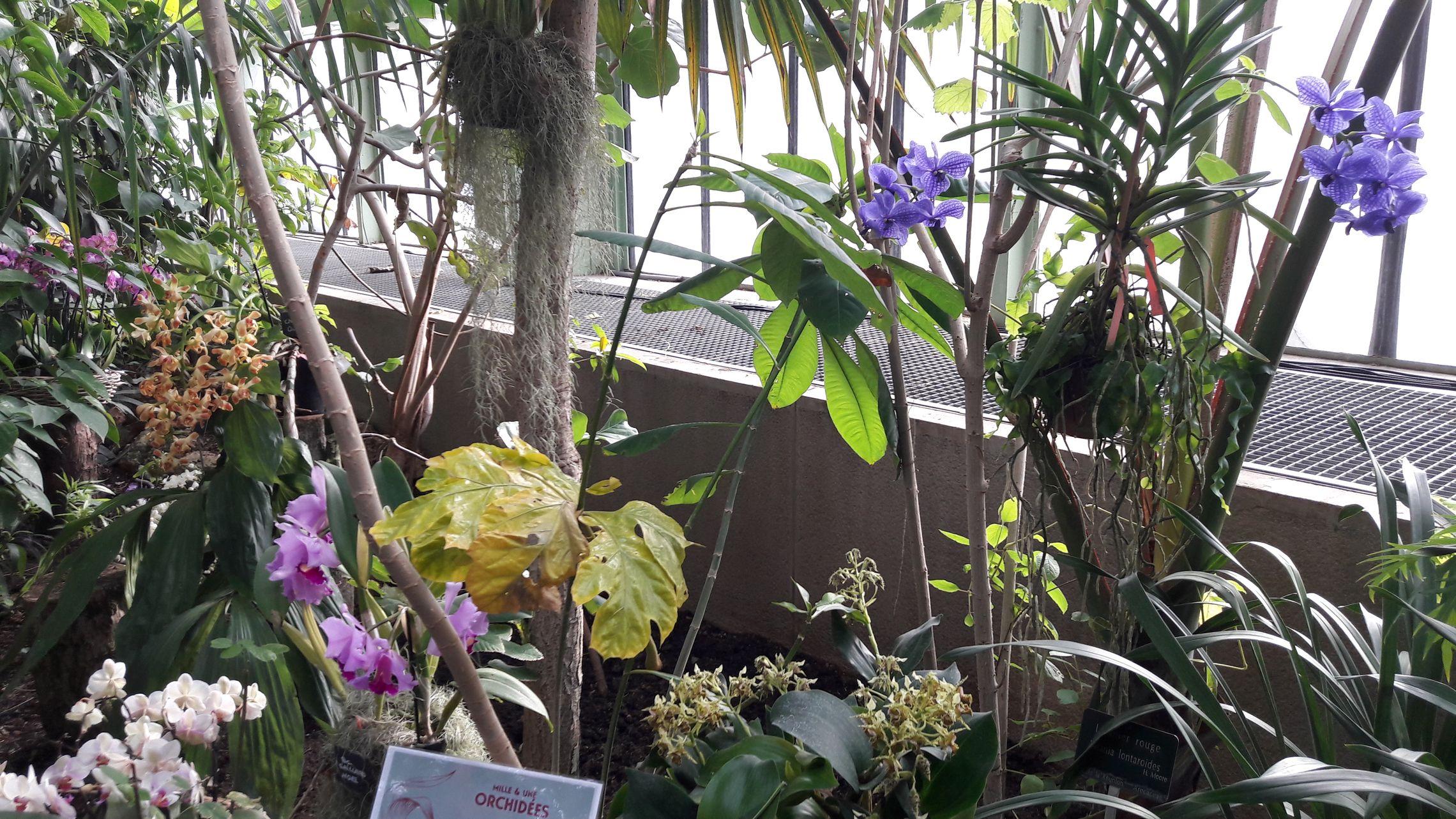 20170219 Jardin des Plantes 04