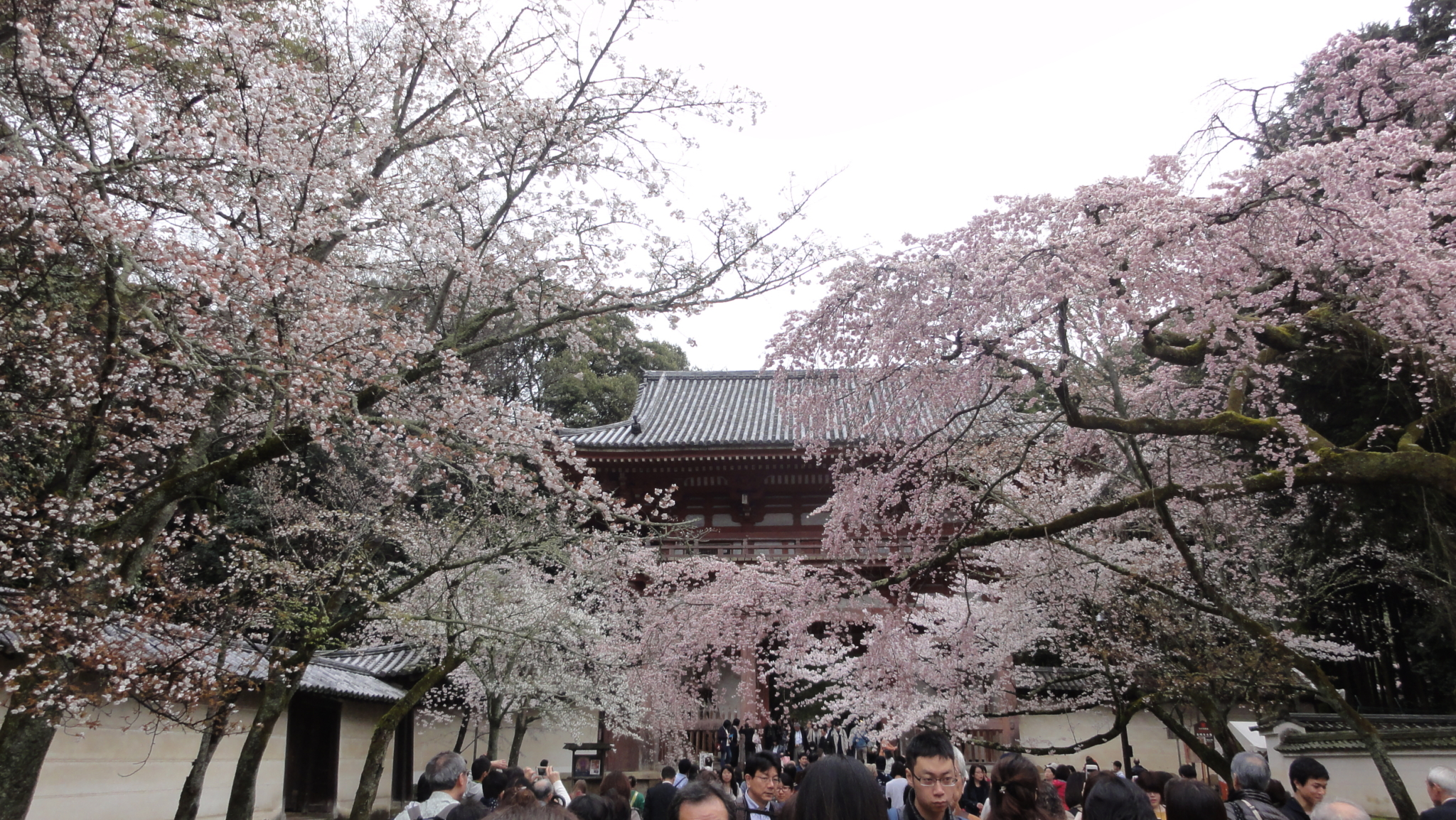 20170408 Daigoji Kyoto 06