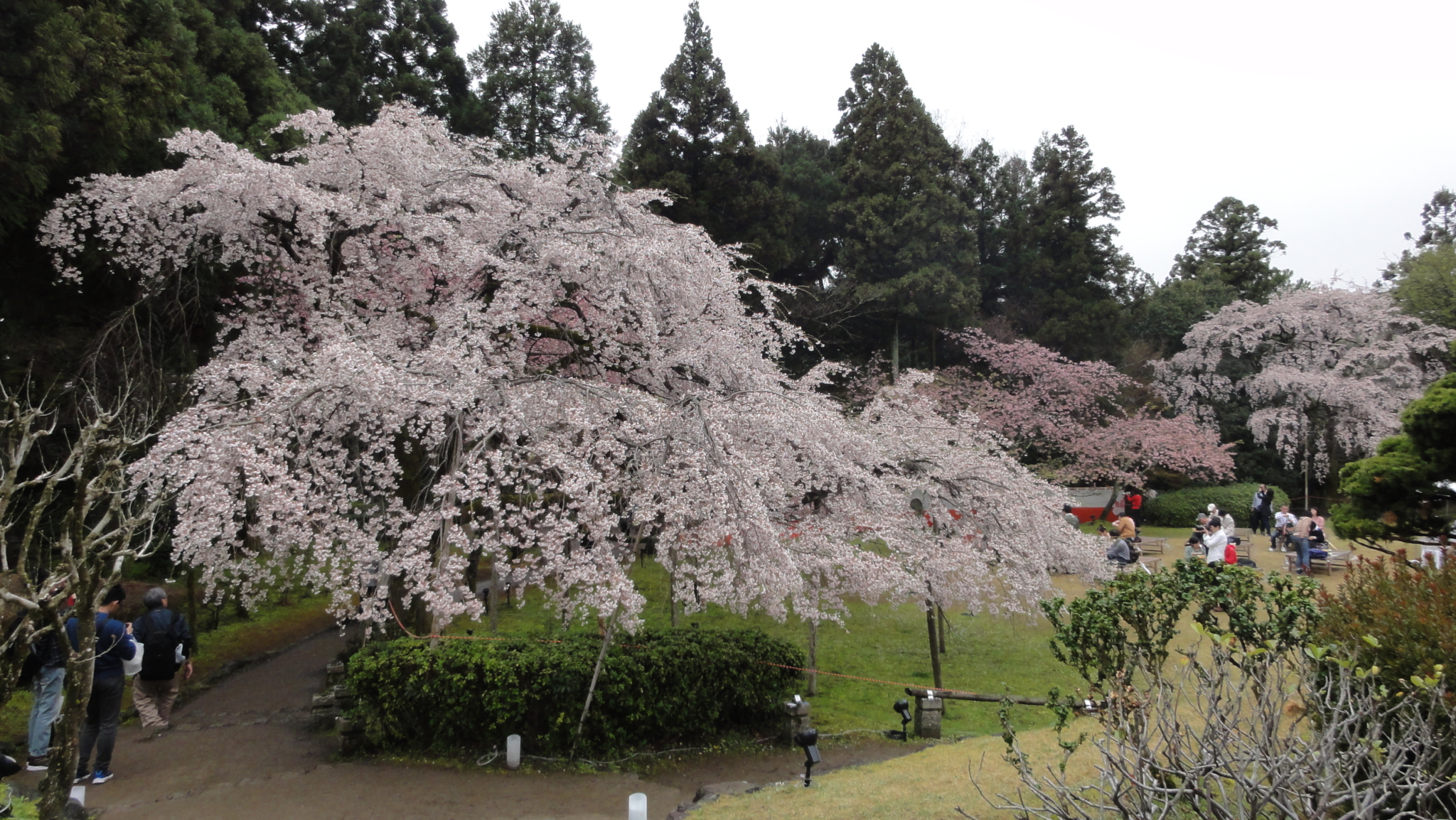 20170408 Daigoji Kyoto 12