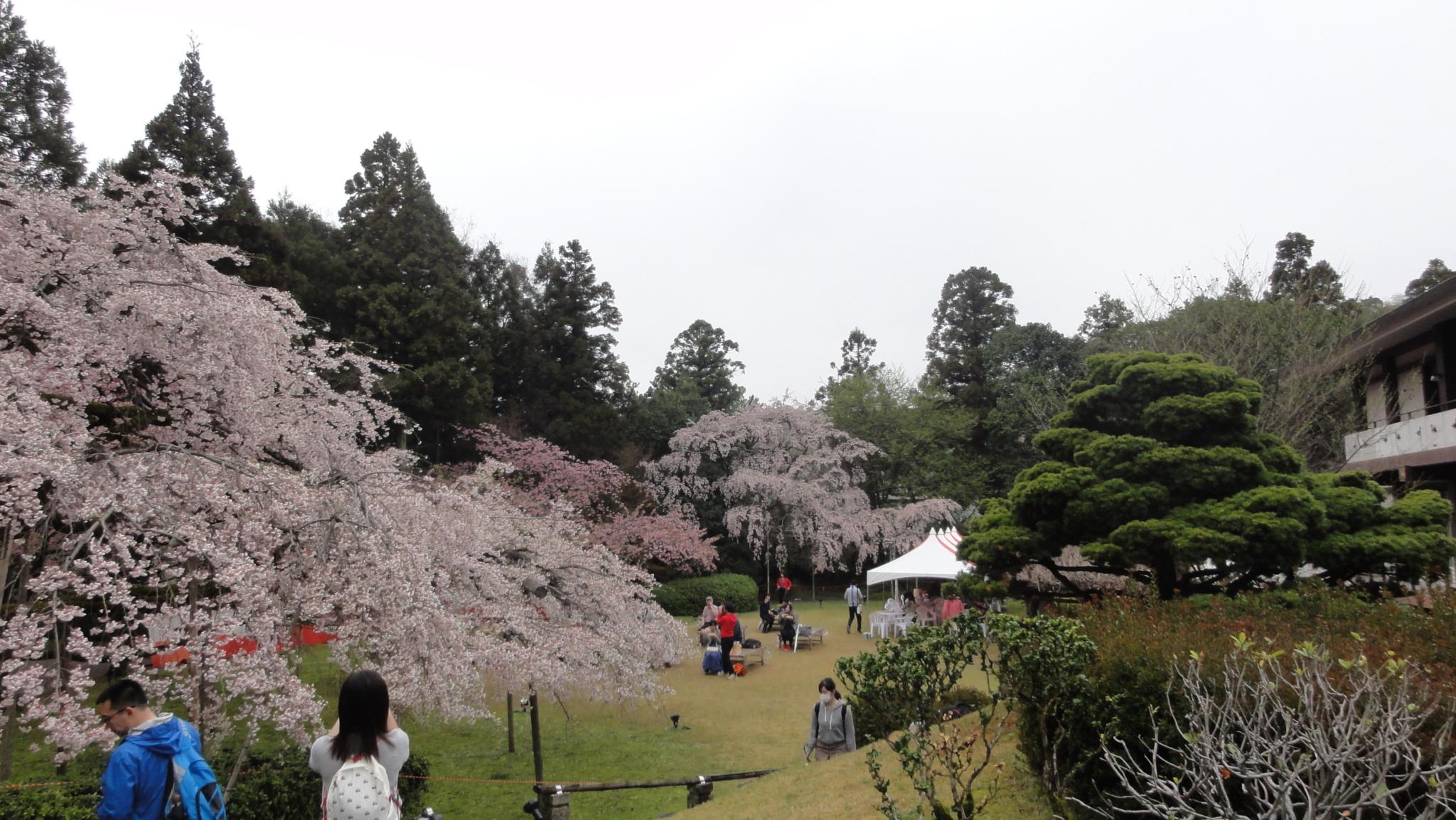20170408 Daigoji Kyoto 17