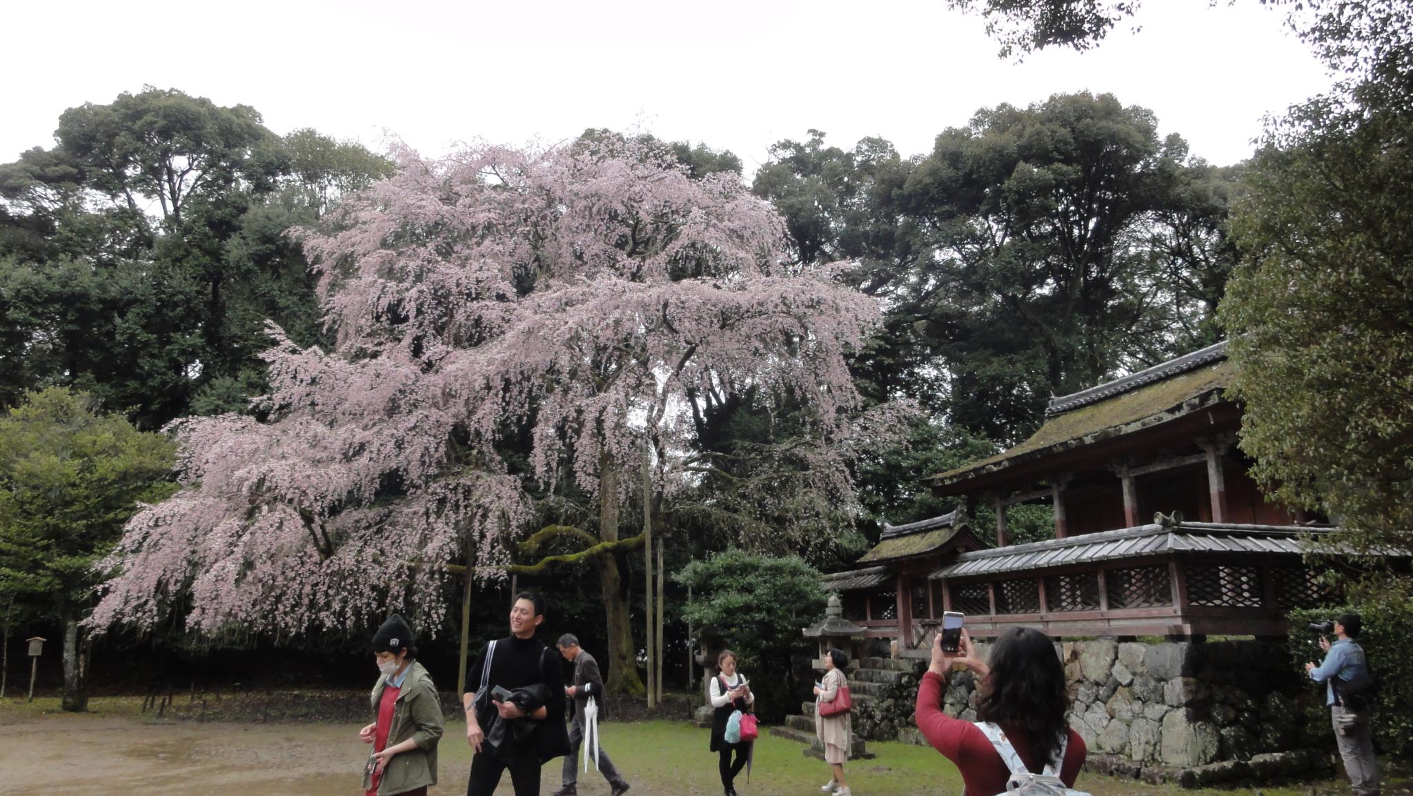 20170408 Daigoji Kyoto 18