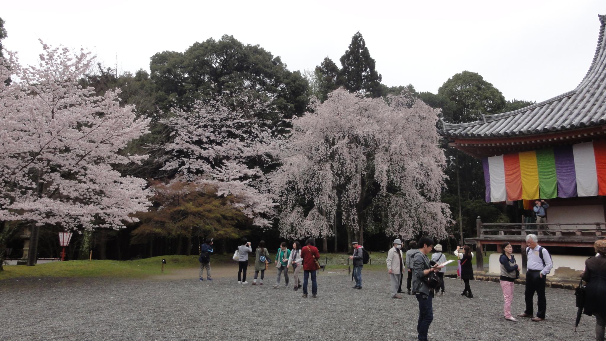 20170408 Daigoji Kyoto 20