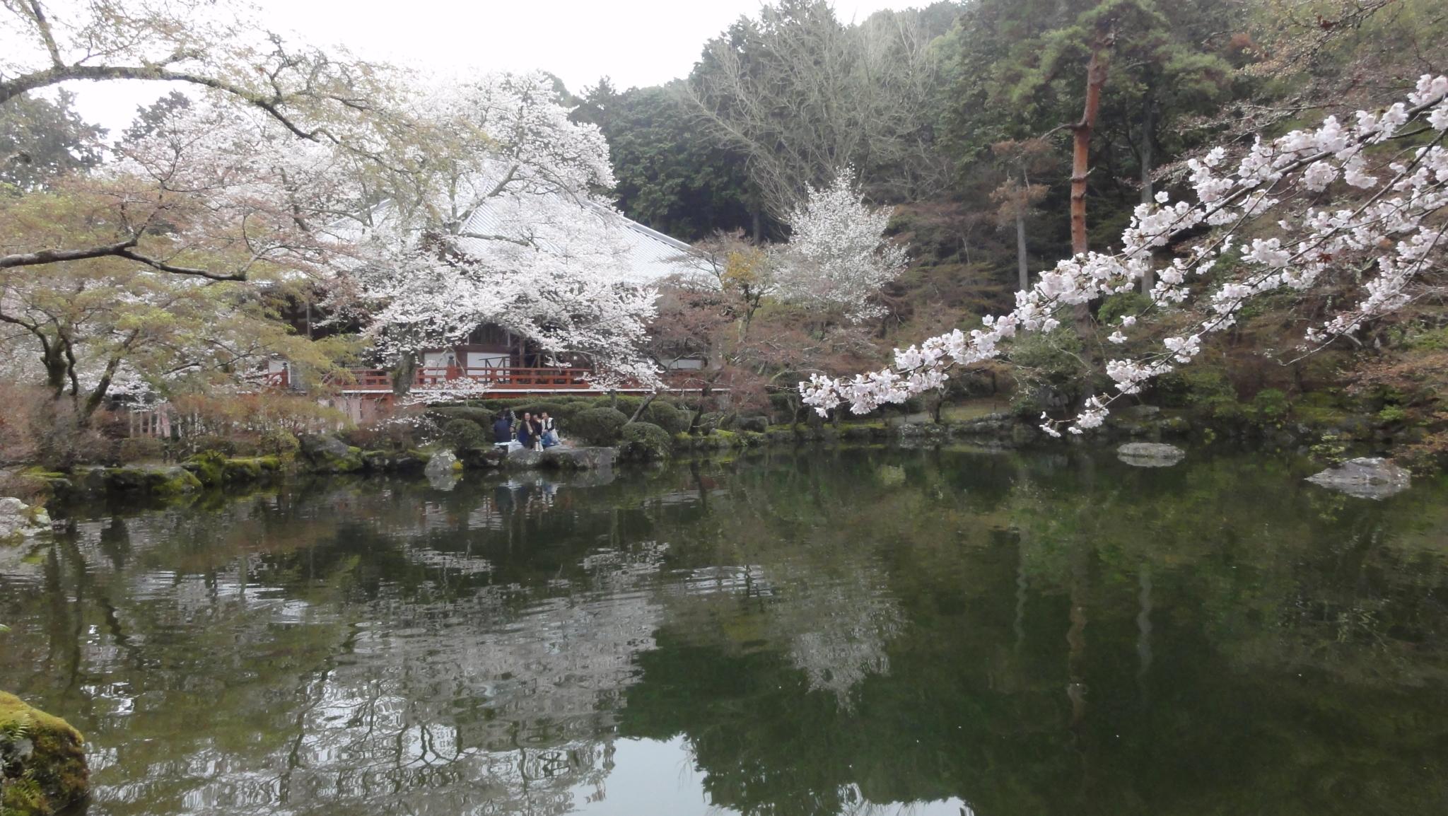 20170408 Daigoji Kyoto 26