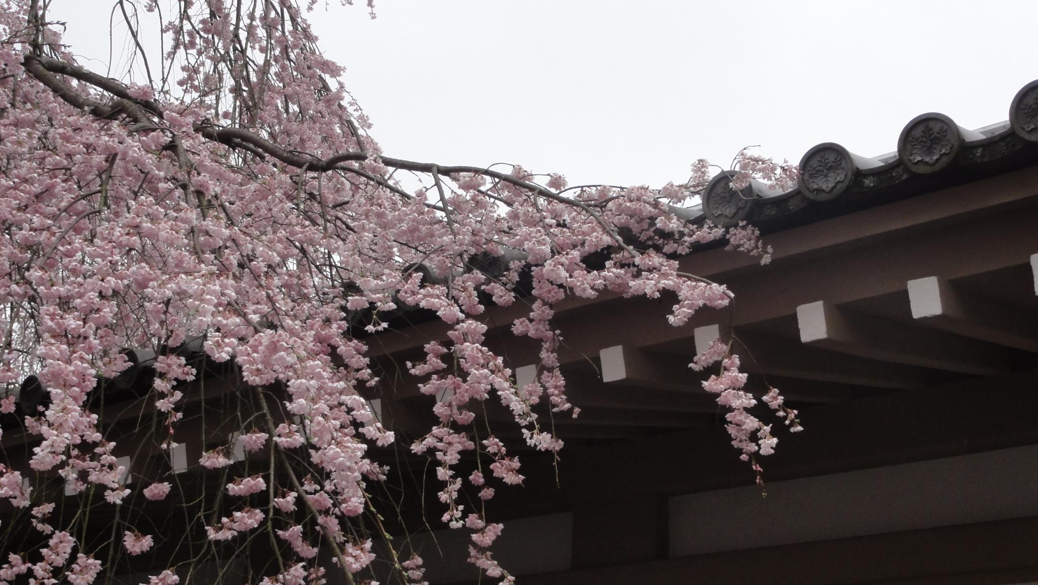 20170408 Daigoji Kyoto 30
