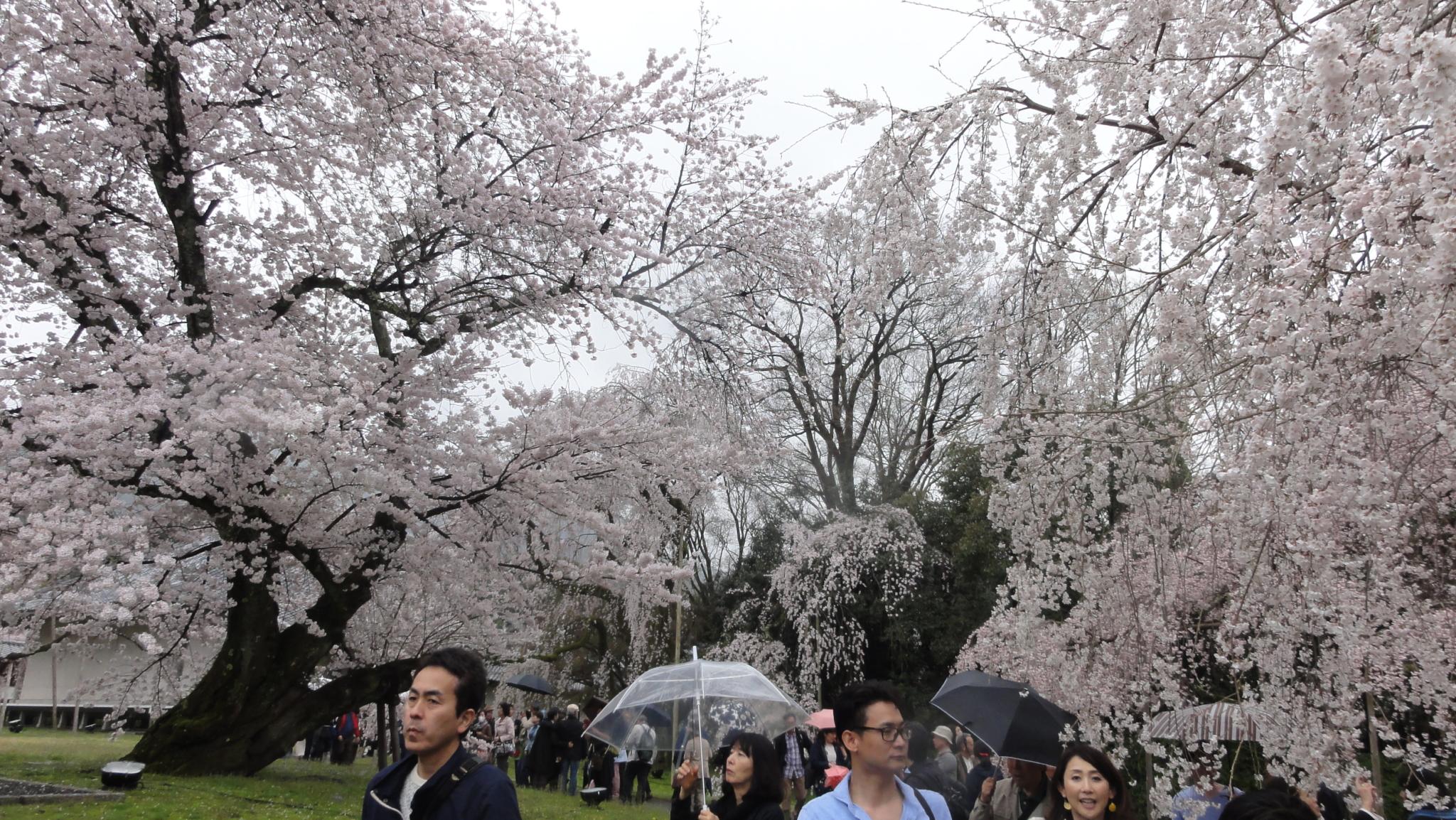20170408 Daigoji Kyoto 32