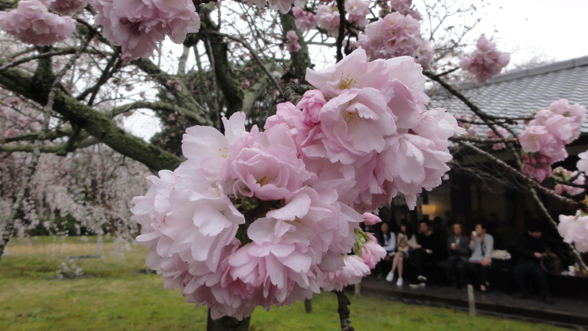 20170408 Daigoji Kyoto 36