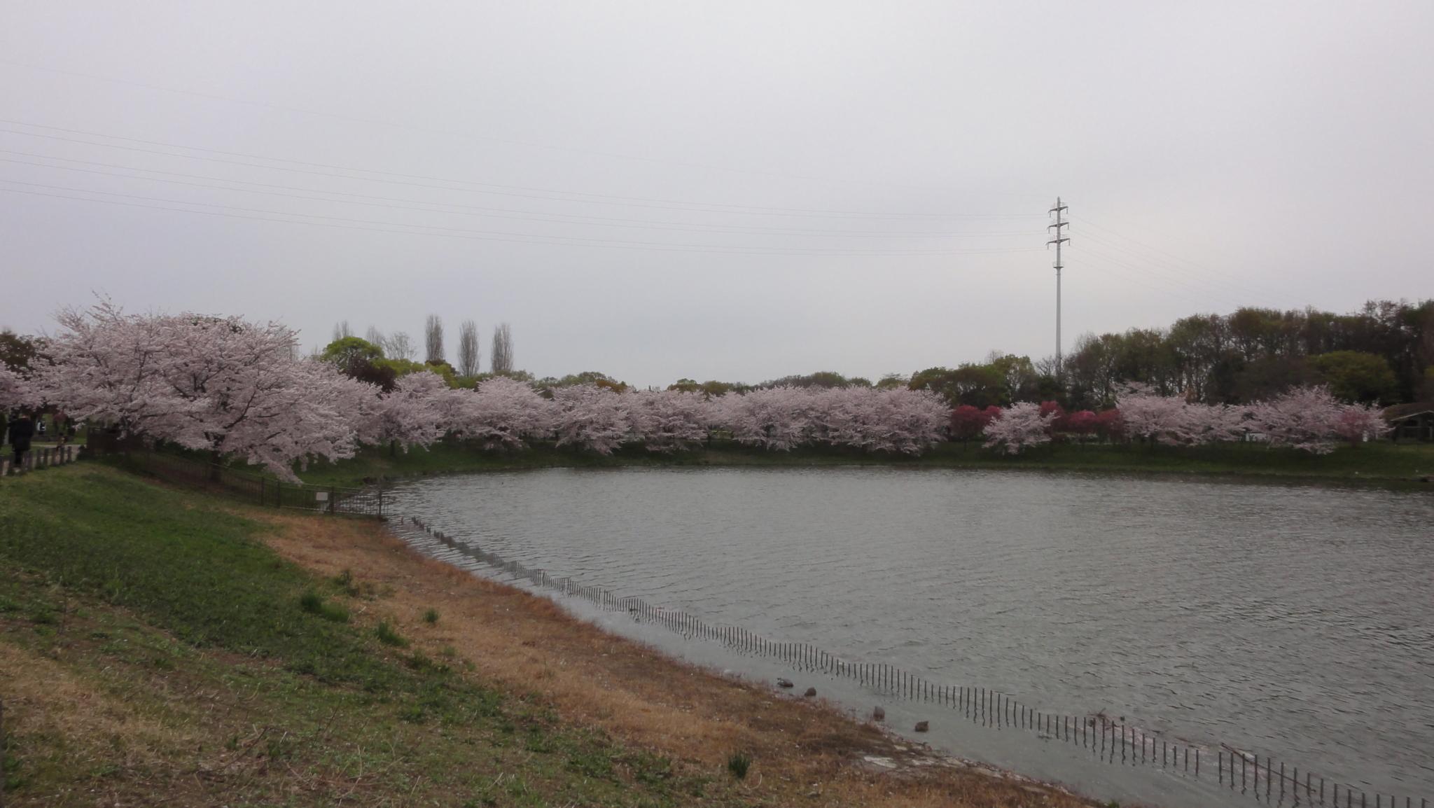 20170410 Ryokuchi 03