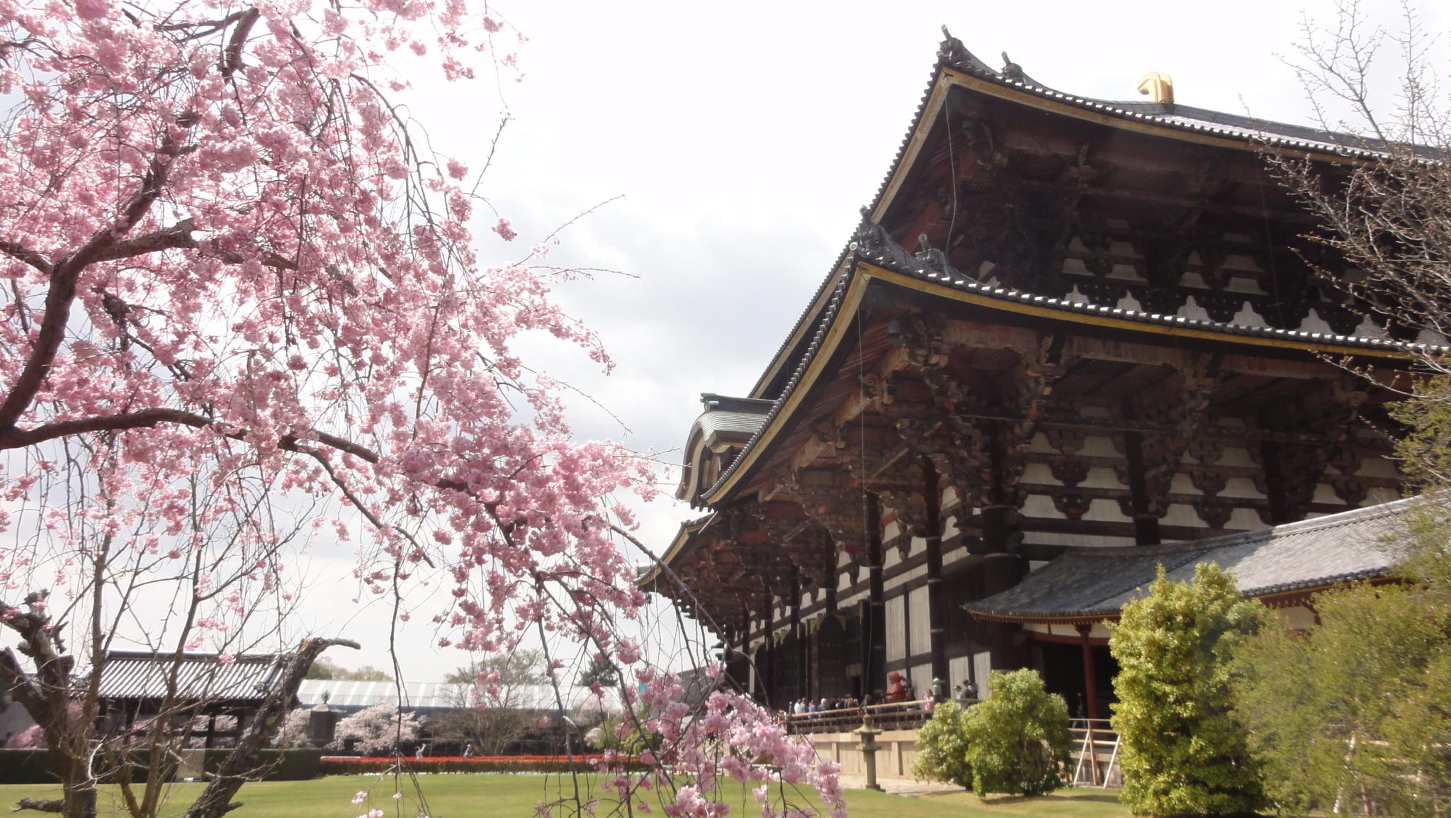 20170413 Nara 11
