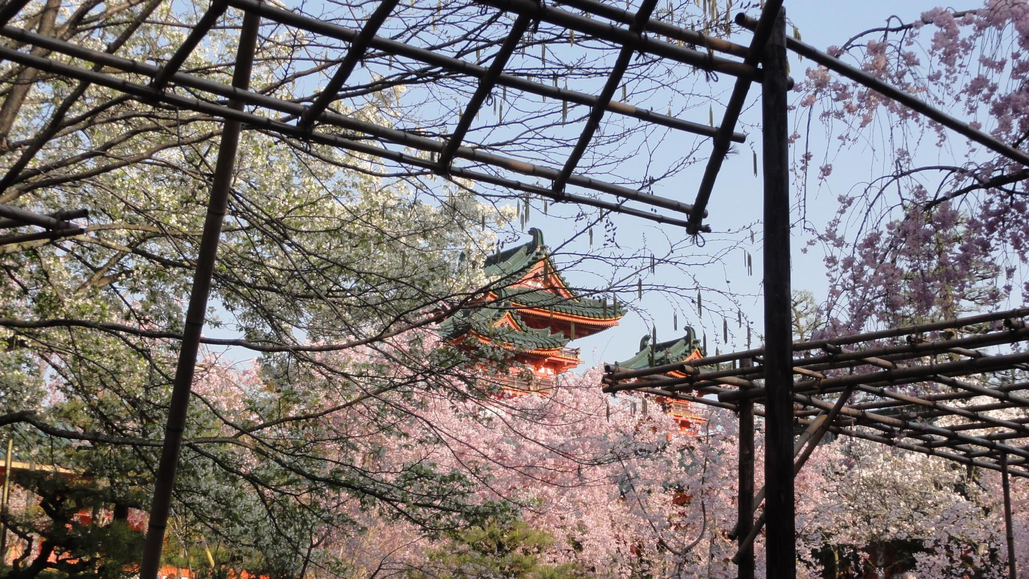 20170414 Kyoto 16