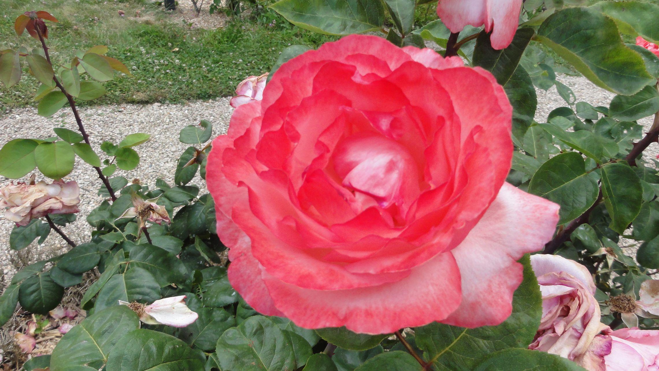 20170602 roseraie vdm 07