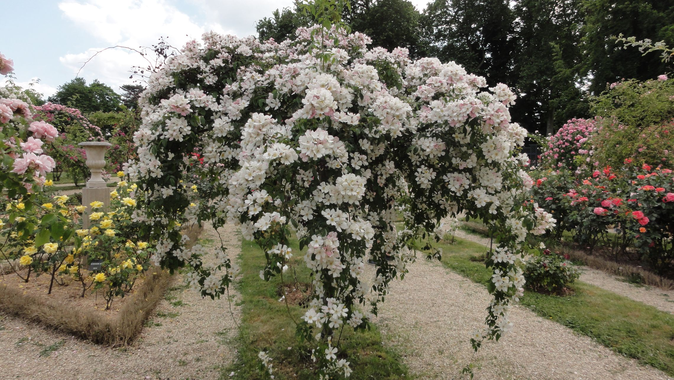 20170602 roseraie vdm 11