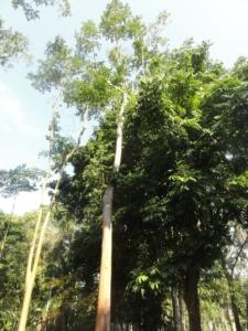 2019 06 19 Jardin botanique 05