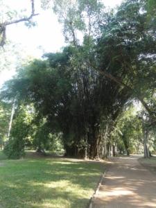 2019 06 19 Jardin botanique 06