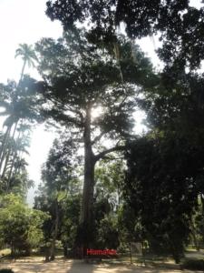 2019 06 19 Jardin botanique 08