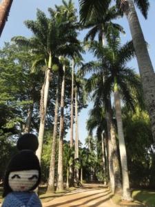 2019 06 19 Jardin botanique 10