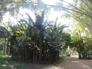 2019 06 19 Jardin botanique 11
