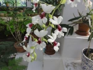 2019 06 19 Jardin botanique 12
