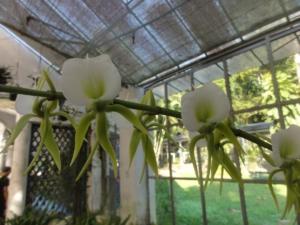 2019 06 19 Jardin botanique 13