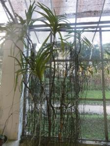 2019 06 19 Jardin botanique 14
