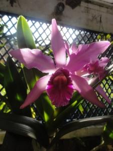 2019 06 19 Jardin botanique 16