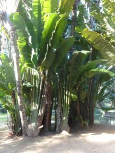 2019 06 19 Jardin botanique 20