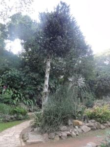 2019 06 19 Jardin botanique 30