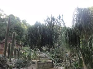 2019 06 19 Jardin botanique 31