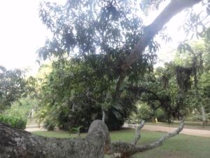2019 06 19 Jardin botanique 32