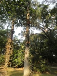 2019 06 19 Jardin botanique 33