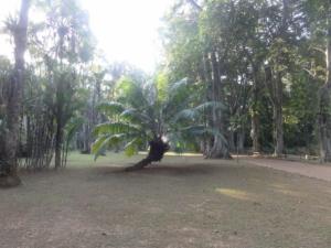 2019 06 19 Jardin botanique 37