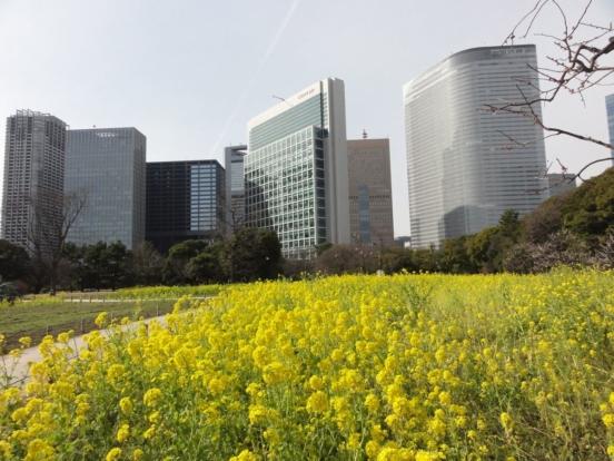2020 02 28 Tokyo Jardin Hama Rikyu 03